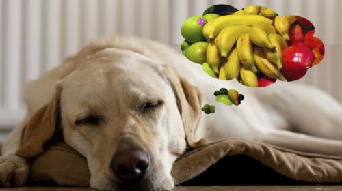 Ultimate Guide of Fruits and Vegetables that Dogs Can and Cannot Eat