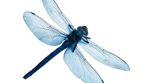 Love Is a Dragonfly