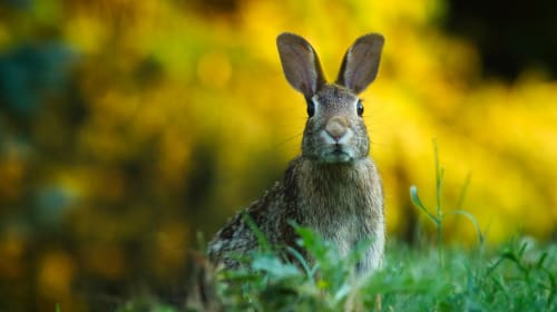 Things You Don't Know About Owning Rabbits