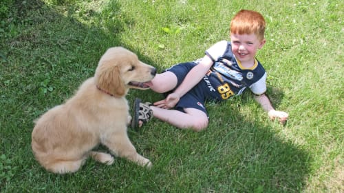 How to Safely Bring a New Dog Home & Introduce Them to Your Kids
