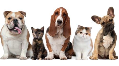 Best Pet Charities in New York City