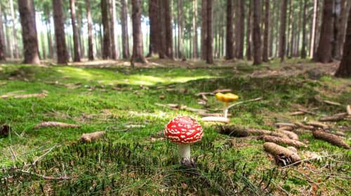 Should 'Magic Mushrooms' Be Legalised?