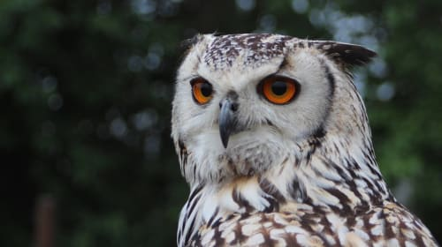 Why Owls Don't Make Good Pets