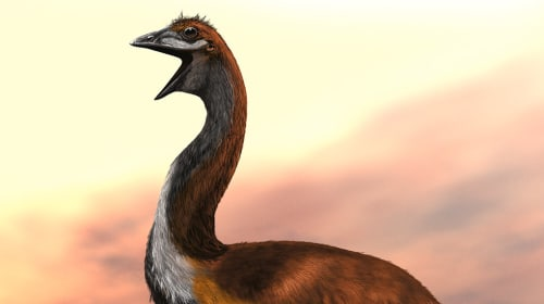 10 Animals That Went Extinct Due to Hunting