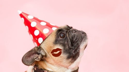 Top 10 Lipsticks for Dogs