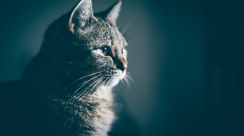 10 Signs Your Cat Is Seriously Ill