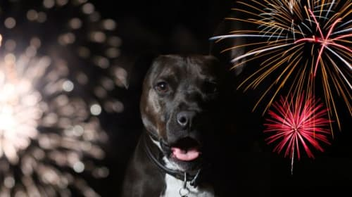 A List of Ways to Calm Your Dog During Firework Season