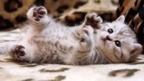 10 Cat Instagrams You Must Follow