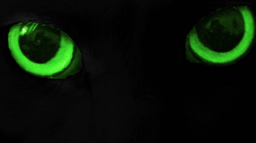 Its Glowing Eyes