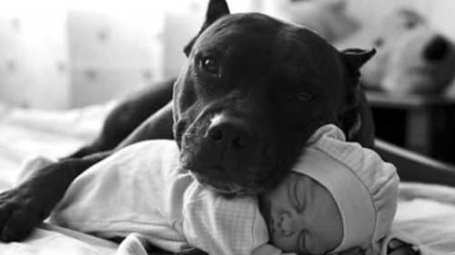 Misunderstood Dogs