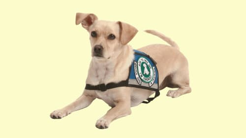 How to Certify a Service Dog