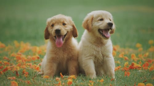Things to Consider Before Getting a New Puppy