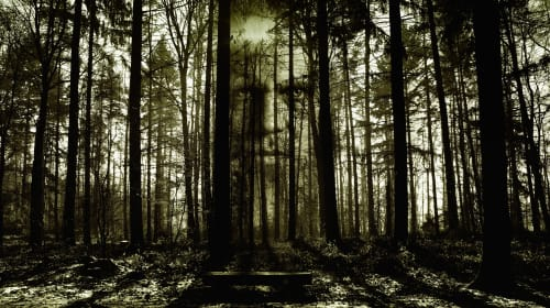 3 Terrifying Short Films About the Forests That Frighten Us