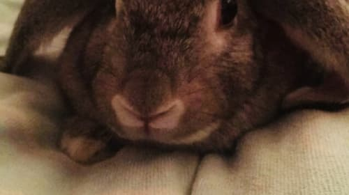 10 Ways to Know Your Bunny Loves You That Aren't Obvious