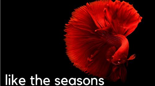 Like the Seasons