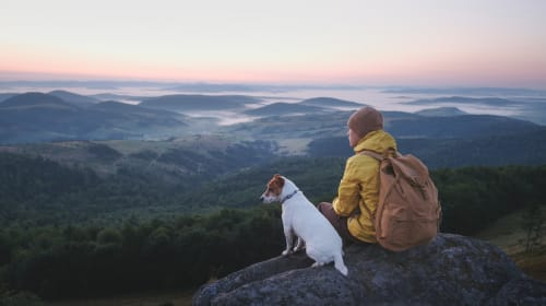 Comprehensive Travel Guide for Dog Owners