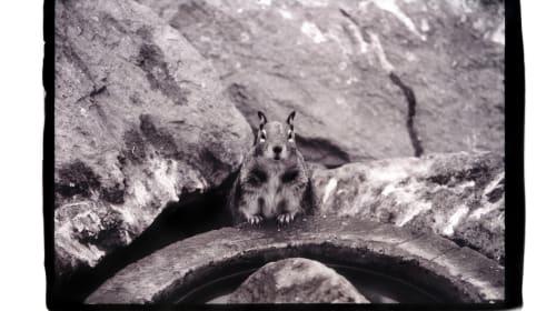 Squirrelendipity