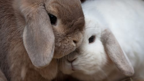 Different Ways to Befriend Your New Bunny