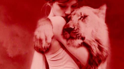 The Pink Lioness