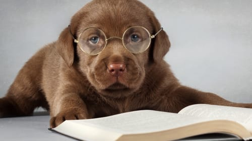 Best Dog Training Books Every New Owner Should Read