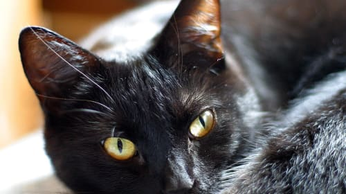 Five Fun and Healthy Benefits of Owning a Cat