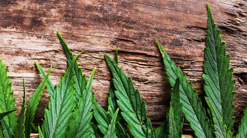 Why You Should Use All Natural Products to Smoke Weed