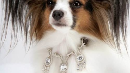 Most Expensive Dog Collars You Can Buy Your Pooch