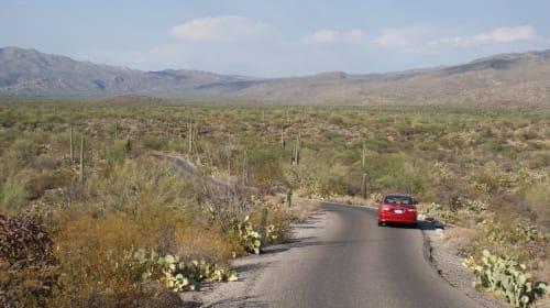 Daytrip: Saguaro National Park