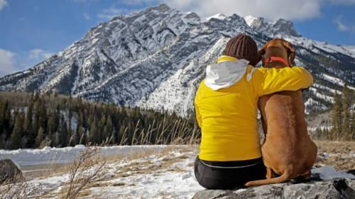 7 Awesome Dog Hiking Tips
