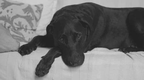 Common Signs Your Dog Is Sick and What to Do