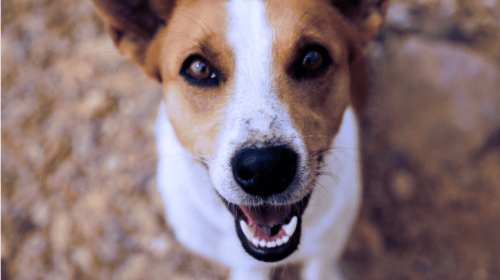 10 Reasons Why You Should Adopt From an Animal Shelter
