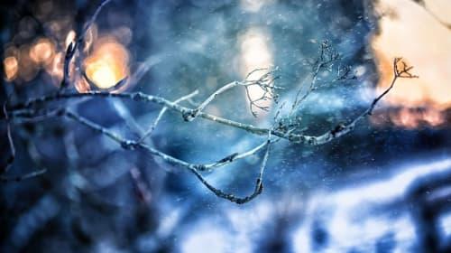 Blue Winter Wood