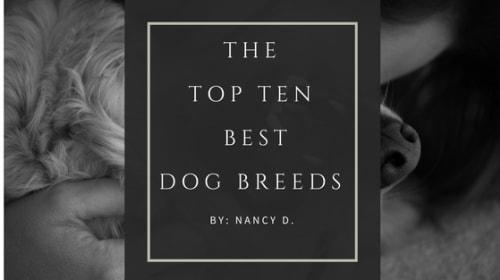 Top Ten Best Dog Breeds