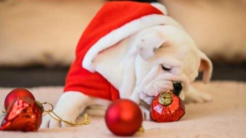 Tips for Perfect Christmas Photos