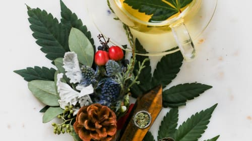 Cannabis Essential Oils for Different Types of Skin