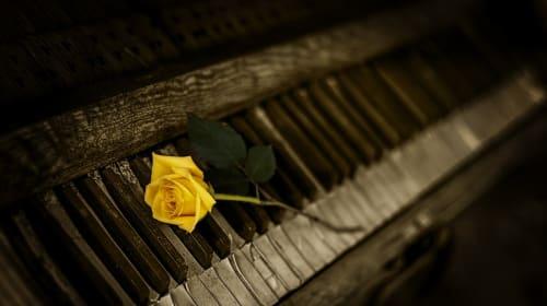 Torn Rose