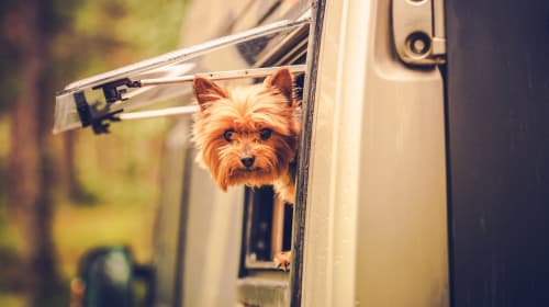 Equipment Essentials when Traveling with Your Dog