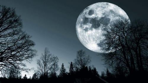 Moonlit Passion