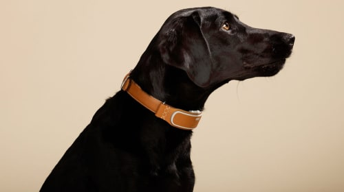Best Reasons to Get a Smart Dog Collar