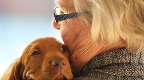 What Are the Benefits for Senior Citizens Owning a Dog