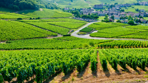 5 Amazing Destinations to Take Your Wine