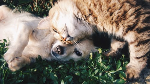 Five Steps to Follow for a Safe and Secure Trip with Your Pet