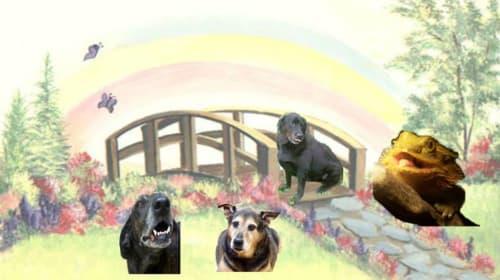 Spike, Pongo, Sadie, and Allie