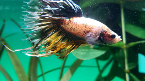 Caring for Your New Betta Fish (In-Depth)