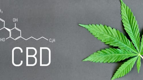 Can CBD-Rich Cannabis Help to Treat Lyme Disease?
