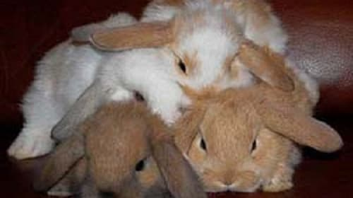 The Pros and Cons of Having a Rabbit as a Pet