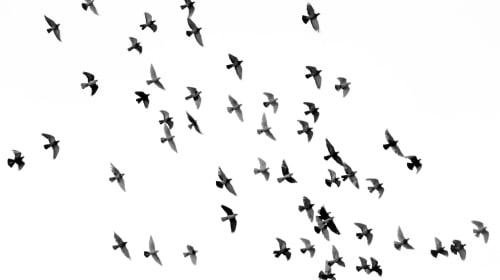 Just Bird Talk