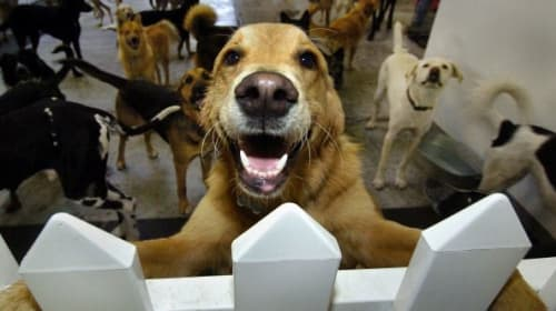 Top 10 Benefits of Doggy Daycare