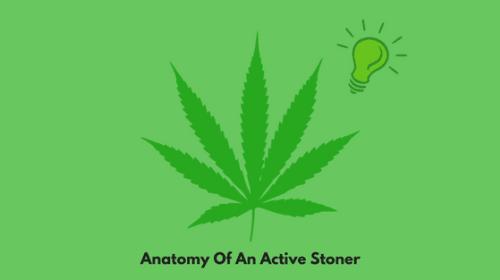 Anatomy Of An Active Stoner