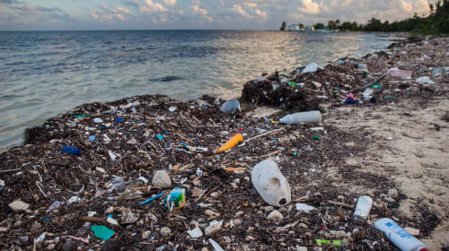 Banning Straws Will Not Save the Oceans